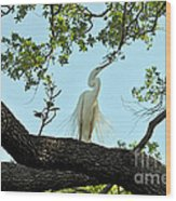 Egret Waiting For Mating  Wood Print