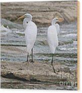 Egrets 4649 Wood Print