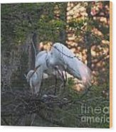 Egrets At Nest Wood Print