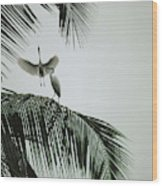Egrets In A Palm Tree, Bali, Indonesia Wood Print