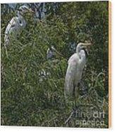 Egrets In Tree Wood Print