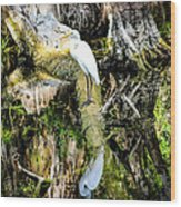 Egrets Reflection Wood Print