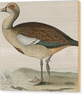 Egyptian Goose Wood Print