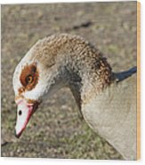 Egyptian Goose Profile Wood Print