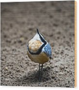 Egyptian Plover Wood Print