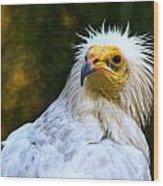 Egyptian Vulture Wood Print