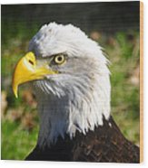 Bald Eagle Head Shot One Wood Print