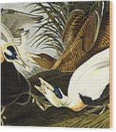 Eider Ducks Wood Print