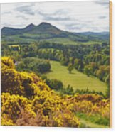 Eildon Hill - Three Peaks And A Valley Wood Print