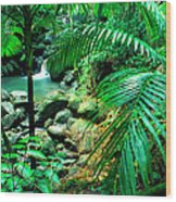 El Yunque Palm Trees And Waterfall Wood Print