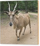 Eland Antelope Out In The Open Wood Print