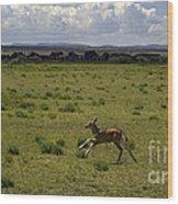 Eland Calf   #7195 Wood Print