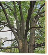 Elder Oak Wood Print