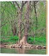 Elder Tree Wood Print