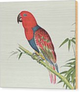 Electus Parrot On A Bamboo Shoot Wood Print