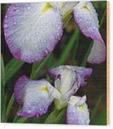 Elegant Purple Iris Wood Print