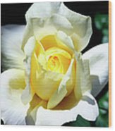 Elegant Rose Palm Springs Wood Print