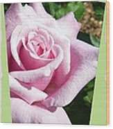 Elegant Royal Kate Rose Wood Print by Will Borden