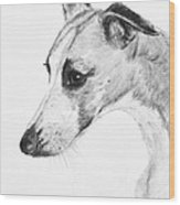 Elegant Whippet Wood Print by Kate Sumners