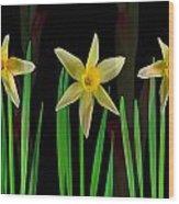 Elegant Yellow Flowers On Green Shoots Wood Print
