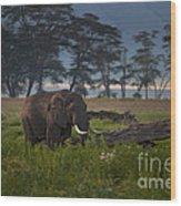 Elephant   #0134 Wood Print