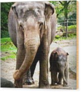 Elephant Baby Olli With Mommy Wood Print