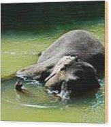 Elephant Bath Wood Print