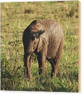 Elephant Calf Wood Print