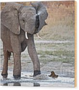 Elephant Calf Spraying Water Wood Print