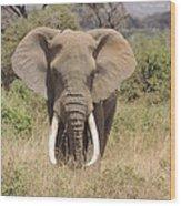 Elephant Charge Wood Print