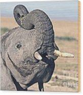 Elephant Curling Trunk Wood Print