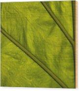 Elephant Ear   #4757 Wood Print