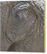 Elephant Eye Chiang Mai, Thailand Wood Print