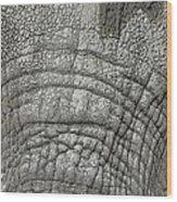 Elephant Eyes Wood Print