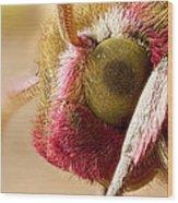 Elephant Hawk Moth Extreme Macro Wood Print