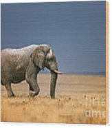 Elephant in grassfield Wood Print