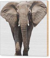 Elephant Isolated Wood Print