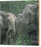 Elephant Ladies Wood Print