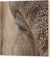 Elephant Lashes Wood Print