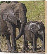 Elephant Mom And Baby Wood Print