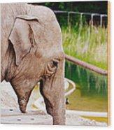 Elephant Open Mouth Wood Print