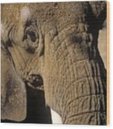 Elephant Portraint Wood Print