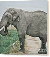Elephant Roadblock Wood Print