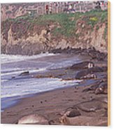 Elephant Seals On The Beach, San Luis Wood Print