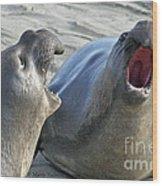 Elephant Seals - San Simeon California Wood Print