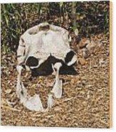 Elephant Skull Wood Print