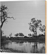 Elephant Skull On Riverbank, Okavango Wood Print