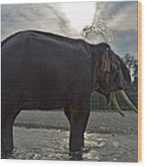 Elephant Taking A Shower On Its Own Wood Print