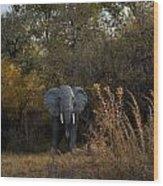Elephant Trail Wood Print