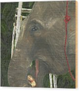 Elephant Under His Thumb Wood Print